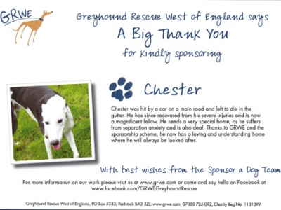 Chester the Greyhound